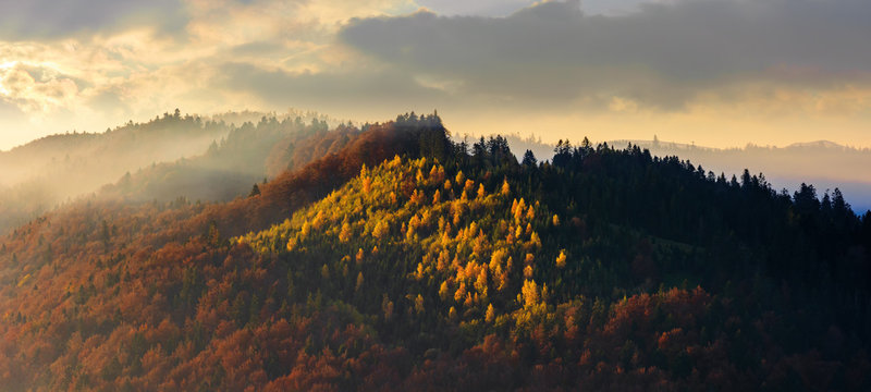 autumnal mountain panorama at foggy sunrise. beautiful nature scenery. cloudy weather, forests in fall foliage