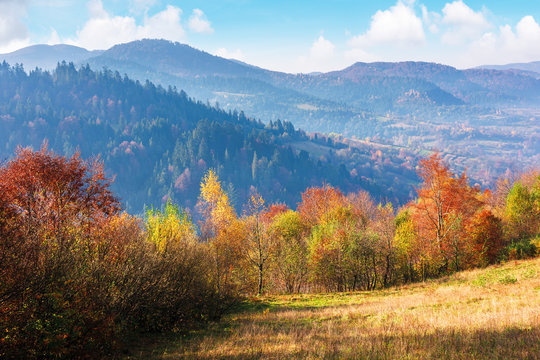 mountainous autumn countryside in the mourning. magical hazy weather with clouds on the blue sky above the ridge in the distance. trees in colorful foliage on the edge of a hill