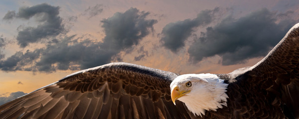 composite image of a bald eagle flying at sunset