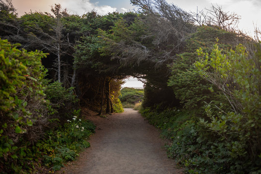 A hiking trail tunnel through the forest