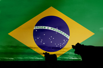 Consumption and production of cattle in countries with the flag of  Brazil. Wall mural