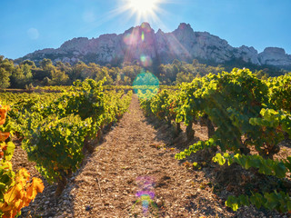 a French vineyard at the base of the spectacular Dentelles de Montmirail mountain range, with dramatic sun flare, bokeh, and light leaks adding color to the image.