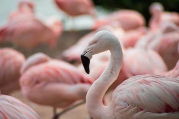 Papiers peints Flamingo flamant rose