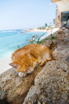 Cute Cat Sleeping near Beach and Turquoise Sea View. Relax travel background.