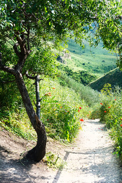 Countryside Path near Tree and Flowers among Green Hills. Journey of Self Discovery. Nature Walking Trail.