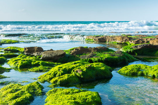 Green Seaweed on Black Rocks Sea Landscape. Fresh Clear Water and White Waves.