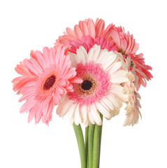 Beautiful gerbera flowers on white background