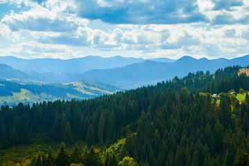 Fototapeten Gebirge Spruces on hills - beautiful summer landscape, cloudy sky at bright sunny day. Carpathian mountains. Ukraine. Europe. Travel background.