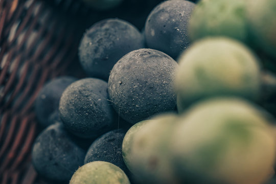 Close up fresh frozen green and blue grape grains background. Macro view.