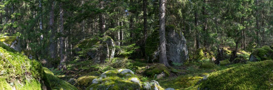 Wald in Smaland in Schweden