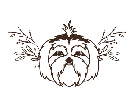 head of cute shih tzu dog on white background