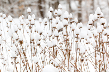 snow covered plants in a winter garden