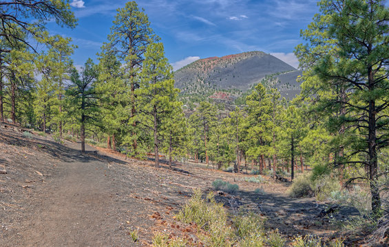 View of Sunset Crater Volcano from the east slope of the Lenox Crater Trail, the dark gray soil is volcanic pumice, Arizona
