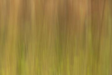 Holz und Herbst - ein Hintergrund