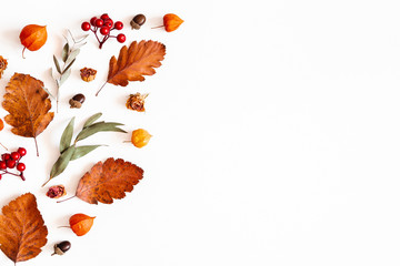 Autumn composition. Physalis flowers, eucalyptus leaves, rowan berries on white background. Autumn,...