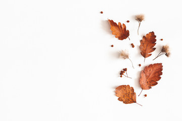 Autumn composition. Dried leaves, flowers, rowan berries on white background. Autumn, fall,...