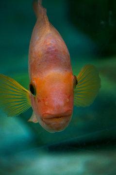 Neugieriger Fisch