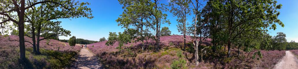 Lüneburger Heide, Besenheide (Calluna vulgaris), Heideblüte, Wanderwege und Wanderer, Niederhaverbeck, Wilseder Berg, Extrem-Panorama, Niedersachsen, Deutschland, Europa