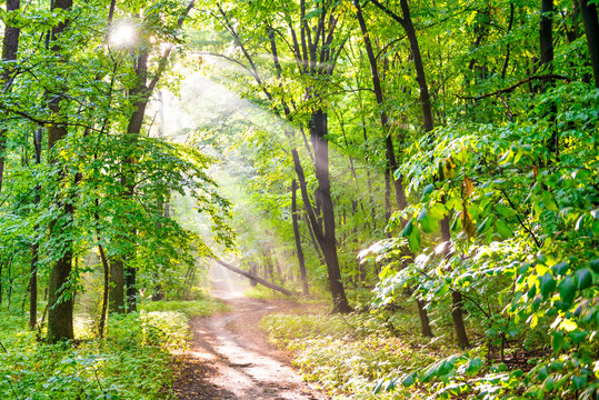 Green forest with autumn trees, footpath and sun light through leaves and fog