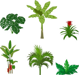 Set of tropical plants on white background