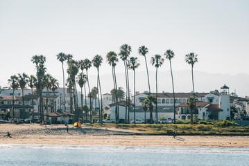 Palm trees on the beach, seen from Stearn's Wharf in Santa Barbara, California