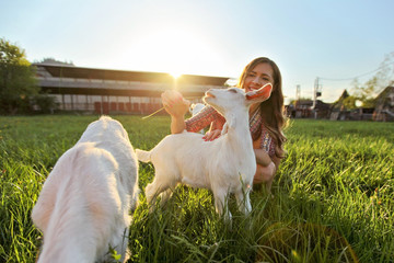 Young woman feeding grass to goat kids, smiling, wide angle photo with strong backlight and sun over farm in background