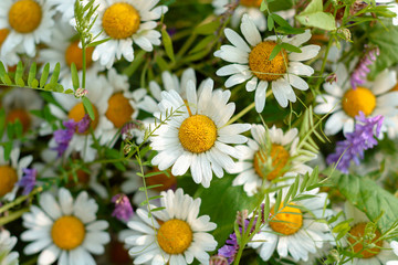 summer flowers - chamomile and bindweed. close-up