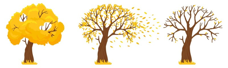 Autumn tree. Yellow leaves fall, trees with fallen leaves and orange leafs fly. Canada october and september autumnal season golden garden tree foliage isolated vector illustration Fotoväggar