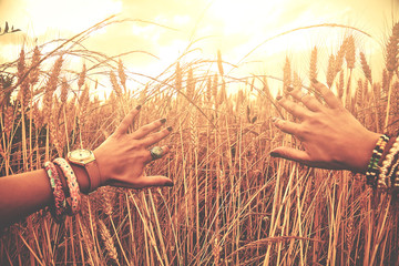 Hands of young woman in a wheat field.