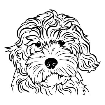 Portrait of a dog. Portrait of the breed golden doodle. Black white illustration of a fluffy dog. Print for clothes. Doodle. Tattoo.