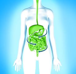 Digestive system detox. Women body cleansing diet.