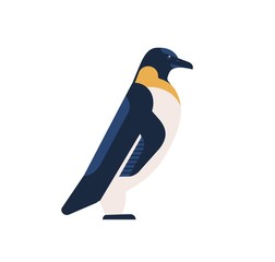 Penguin flat vector illustration. Arctic bird with black back and white belly isolated on white background. Aquatic flightless bird minimalist drawing. King penguin, aptenodytes patagonicus clipart.