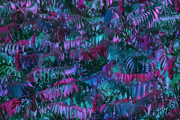 Wall Mural - Blue and pink emerald leaves, background. Modern floral texture