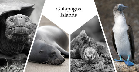 Postcard with four images of the Galapagos islands