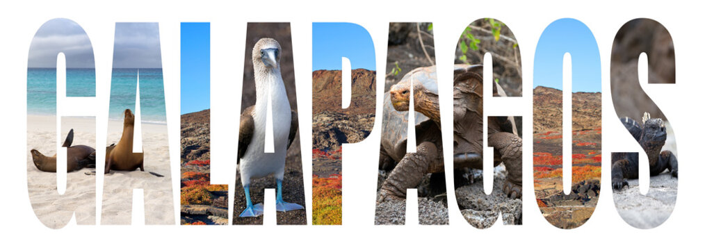 The Galapagos Islands letter concept