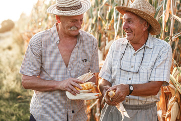 Portrait of two senior farmers. They   standing in front of the corn field.