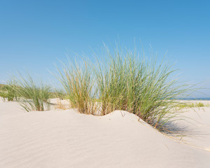 marram grass or sand reed on sand of dune with shadows from summer sun