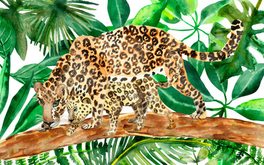 Watercolor hand painted wild nature composition with two leopard family: mother protects and teaching to hunt child on the brown tree log, on the green tropical jungle leaves on the background