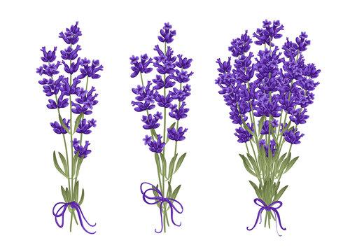 Bouquet of lavender flowers. Vector illustration EPS 10