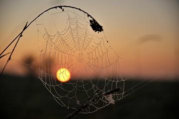 pajęczyna na słońcu