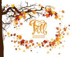 Wall Mural - Orange autumn leaves