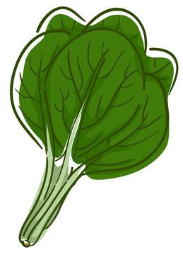 Spinach Superfood Illustration