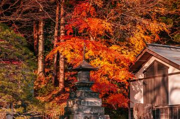 Vibrant colourful maple tree and pagoda Yamadera Temple in autumn - Yamagata, Japan