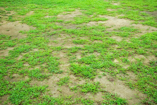 Pests and disease cause amount of damage to green lawns, lawn in bad condition and need maintaining, The ground of the lawn is not nourished, therefore the grass does not grow.