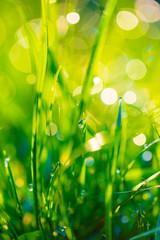 Fotobehang Gras grass with dew drops closeup