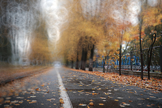 Autumn backgroun rain in the park