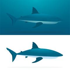 Shark. Sharks vector illustrations set. Cartoon style sharks drawing. Part of set.