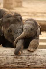 Tuinposter Olifant Elefantenkinder im Zoo