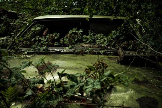 old car, overgrown
