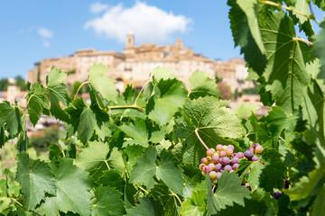Vineyards of the historic Italian village of Cossignano in Italy.